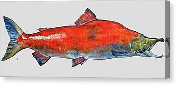 Sockeye Salmon Canvas Print by Juan  Bosco