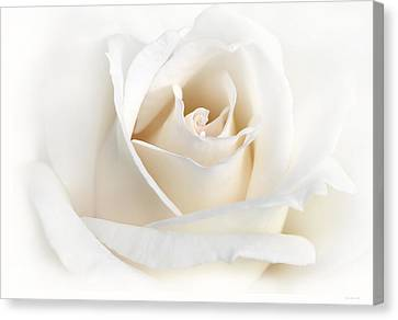 Soft Ivory Rose Flower Canvas Print by Jennie Marie Schell