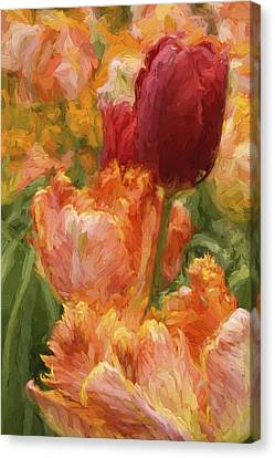 Soft Tulips Canvas Print by Paul W Faust -  Impressions of Light