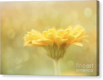 Soft Yellow Gerbera Canvas Print by LHJB Photography