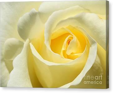 Soft Yellow Rose Canvas Print by Sabrina L Ryan