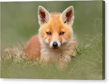 Softfox -young Fox Kit Lying In The Grass Canvas Print by Roeselien Raimond