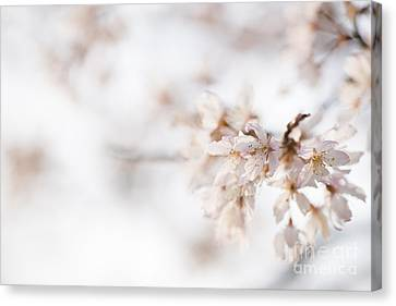 Softly Blossom Canvas Print by Anne Gilbert