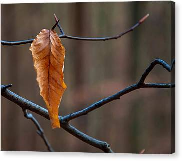 Solitary Leaf Canvas Print by Chris Flees