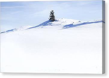 Solitary Canvas Print by Theresa Tahara