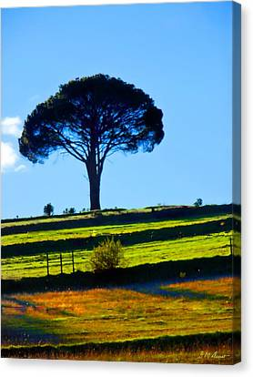 Solitude Canvas Print by Michael Durst