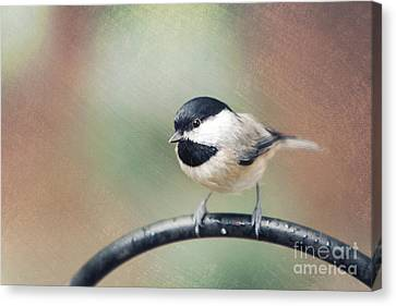 Solo Flight Canvas Print by Kay Pickens