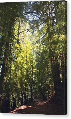 Some Days Really Shine Canvas Print by Laurie Search