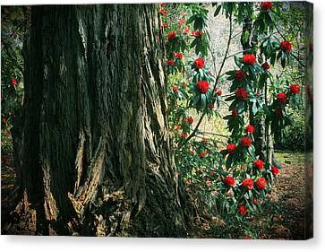Sometimes Life Is Sweet Canvas Print by Laurie Search