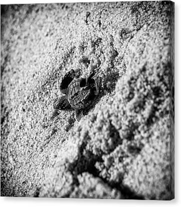Sometimes We Fall Canvas Print by Sebastian Musial