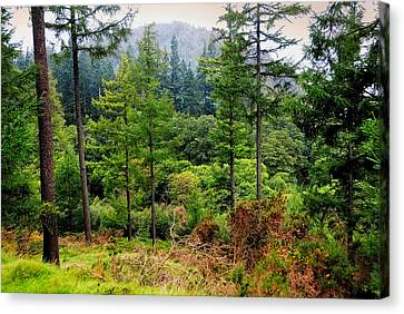 Somewhere In The Forest Over Upper Lake. Glendalough. Ireland Canvas Print by Jenny Rainbow