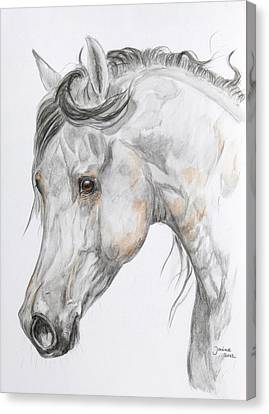 Son Of The Wind Canvas Print by Janina  Suuronen