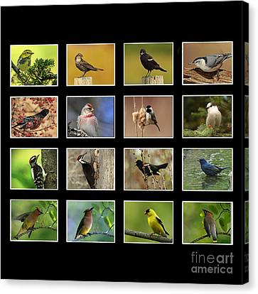 Song Birds Of Canada Collection Canvas Print by Inspired Nature Photography Fine Art Photography