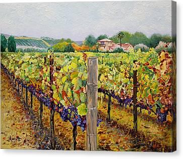 Sonoma Vineyard Canvas Print by Ron Aucutt