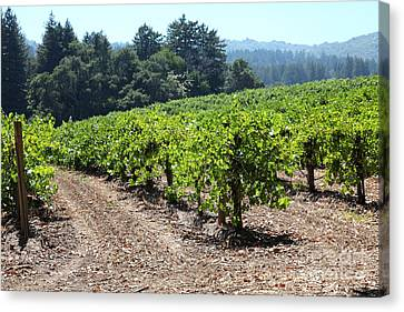 Sonoma Vineyards In The Sonoma California Wine Country 5d24512 Canvas Print by Wingsdomain Art and Photography