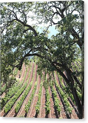 Sonoma Vineyards In The Sonoma California Wine Country 5d24619 Vertical Canvas Print by Wingsdomain Art and Photography