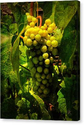 Sonoma Wine Grapes 001 Canvas Print by Lance Vaughn