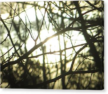 Soothing Force Canvas Print by Sonali Gangane