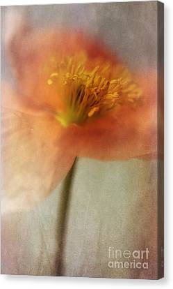 Soulful Poppy Canvas Print by Priska Wettstein