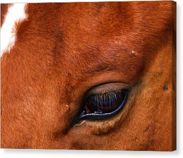 Soulful Canvas Print by Tom Druin