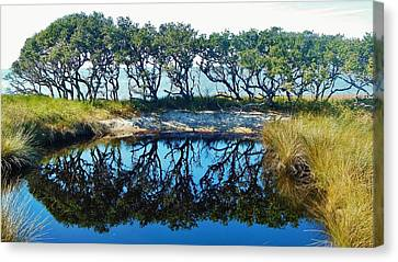 Sound Side Reflection 1 12/03 Canvas Print by Mark Lemmon