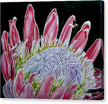 South African Flower Protea Painting Canvas Print by Sylvie Heasman