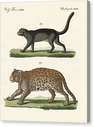 South American Animals Canvas Print by Splendid Art Prints
