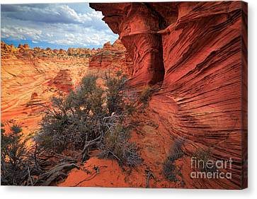 South Coyote Buttes Grand View Canvas Print by Inge Johnsson