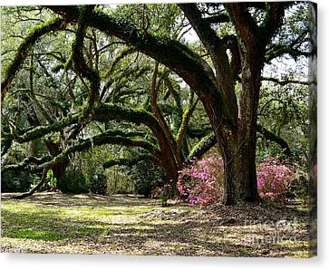 Southern Beauty Canvas Print by Cindy Nearing