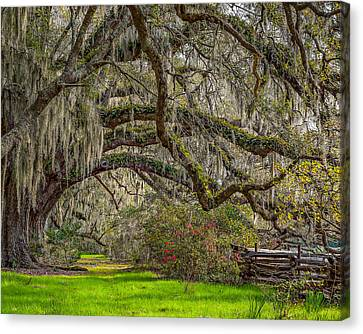 Southern Charm Canvas Print by Steve DuPree