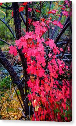 Southern Fall Canvas Print by Chad Dutson