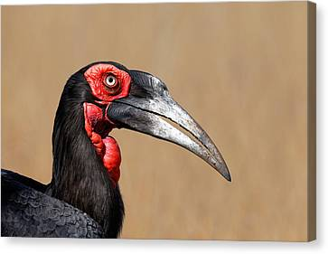 Southern Ground Hornbill Portrait Side View Canvas Print by Johan Swanepoel
