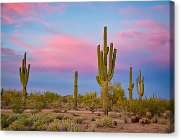 Southwest Desert Spring Canvas Print by James BO  Insogna