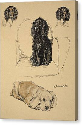 Spaniels, 1930, Illustrations Canvas Print by Cecil Charles Windsor Aldin