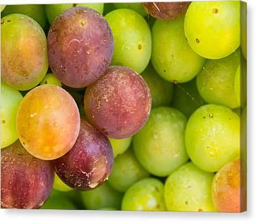 Spanish Grapes Macro Canvas Print by Kaleidoscopik Photography