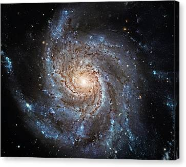 Sparkle Canvas Print by The  Vault - Jennifer Rondinelli Reilly