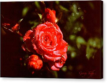 Sparkling Canvas Print by George Tuffy