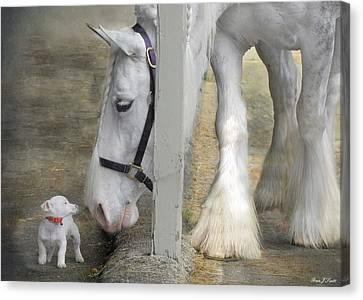 Sparky And Sterling Silvia Canvas Print by Fran J Scott