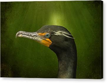 Speckled Cormorant  Canvas Print by Bill Tiepelman