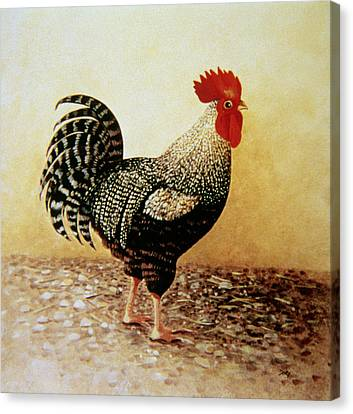 Speckled Rooster  Canvas Print by Dory Coffee