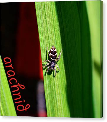 Spider On Green Leaf Canvas Print by Toppart Sweden