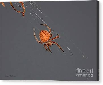 Spider Spinning On Autumn Leaves Canvas Print by Susan Wiedmann