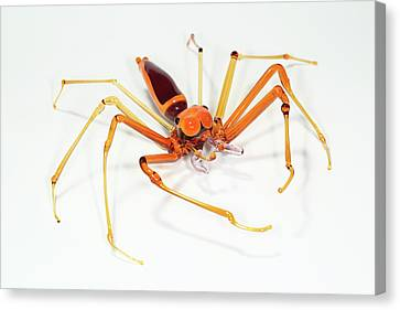 Spider Canvas Print by Tomasz Litwin