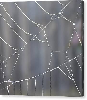 Spider Web In Rain Canvas Print by Cheryl Miller