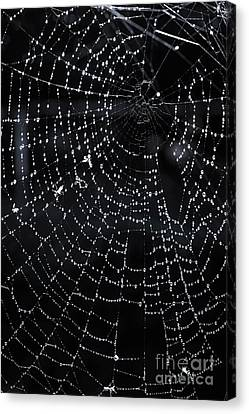 Spiderweb Canvas Print by Elena Elisseeva