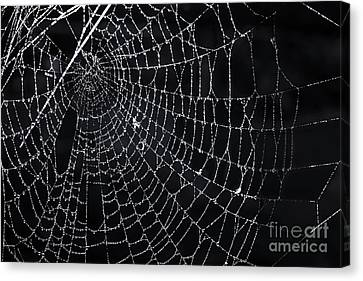Spiderweb With Dew Canvas Print by Elena Elisseeva