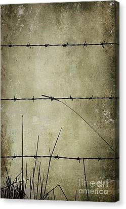 Spikey Wire Canvas Print by Svetlana Sewell
