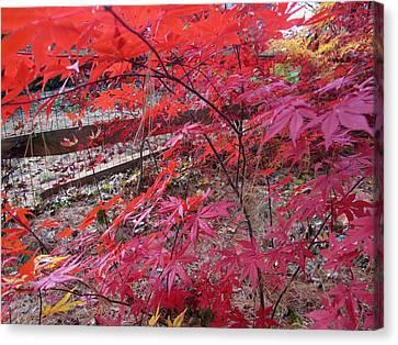 Splendid Fall Canvas Print by Valia Bradshaw