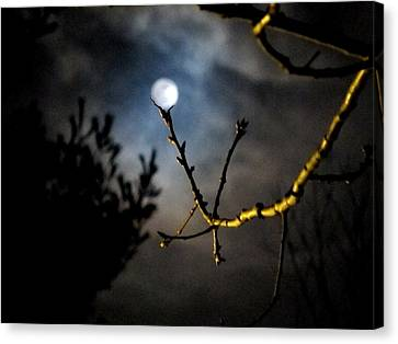 Spooky Moon Canvas Print by Donnie Freeman