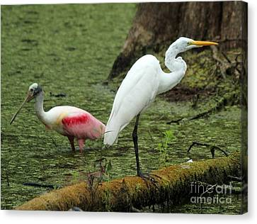 Spoonbill And Egret Canvas Print by Theresa Willingham